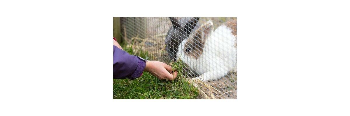 Das richtige Futter für die Kaninchenhaltung - Was ist das richtige Futter für Hasen und Kaninchen