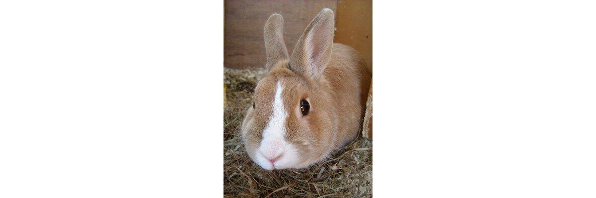 Die richtige Käfighaltung für Kaninchen - Käfighaltung von Kaninchen und Hasen