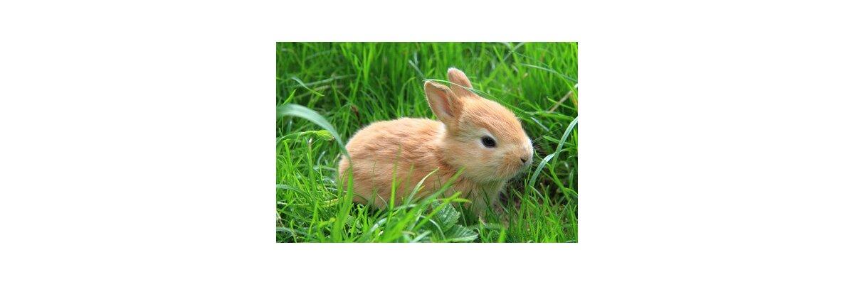 Außenhaltung von Kaninchen - Außenhaltung von Kaninchen & Hasen
